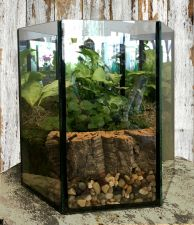 Mirrored Terrarium