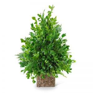 Boxwood Simplicity Tree